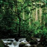 Pflanzenwirkstoffe aus Malaysia und Indonesien