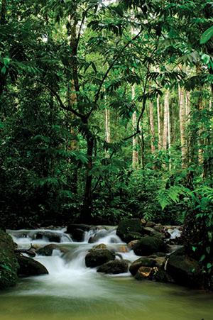Reichtum an Heilpflanzen in den Regenwäldern Malaysias und Sumatras