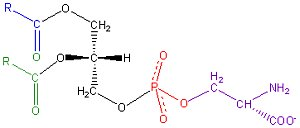 Phosphatidylserin als Nahrungsergänzung