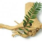 Tongkat Ali (Eurycoma longifolia): Wirkung gegen Osteoporose im Tiermodell
