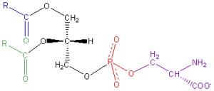 Phosphatidylserine structural formula